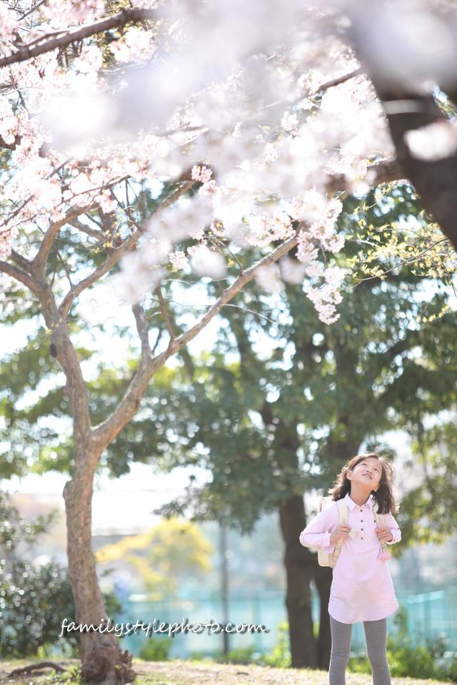 江戸川区 ランドセル 桜