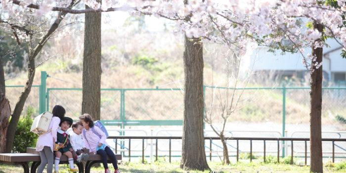 江戸川区 桜 兄弟写真