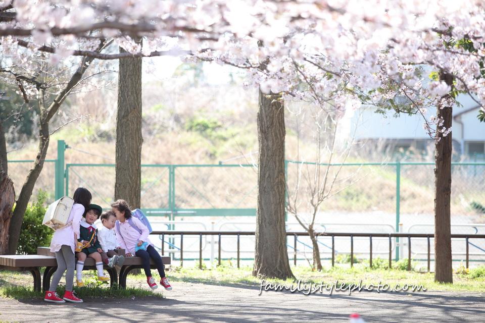 桜の木下で家族写真