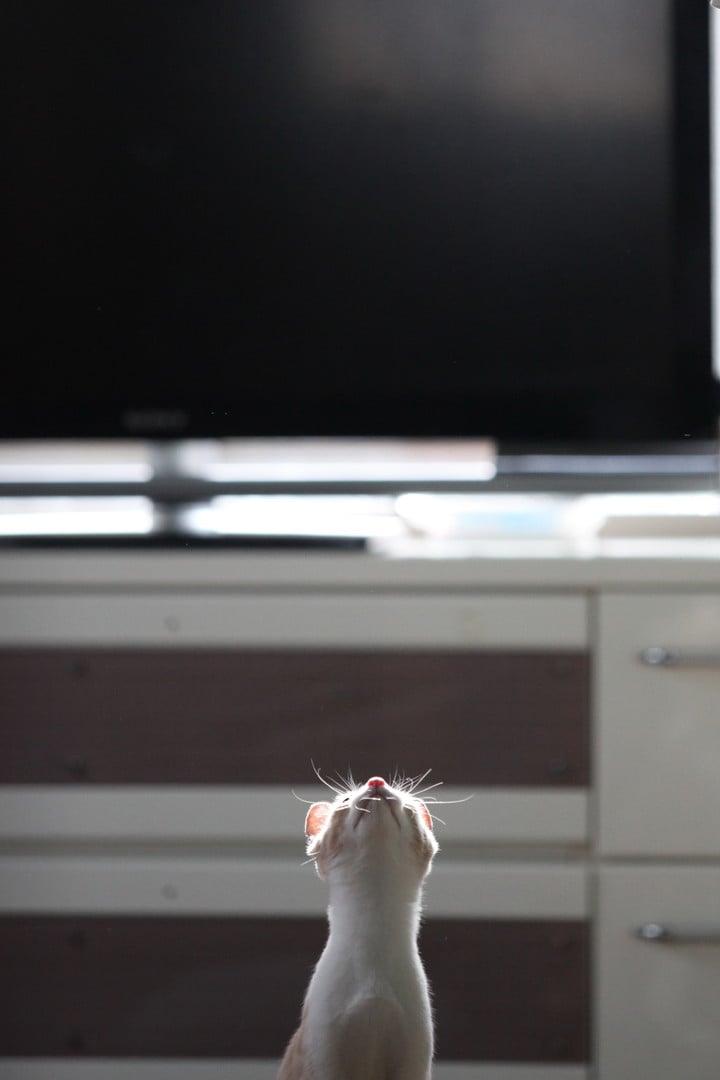 東京猫撮影