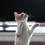 東京出張猫撮影|かわいい幼児期の猫ちゃんを撮りました